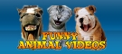 Funny Animal Videos